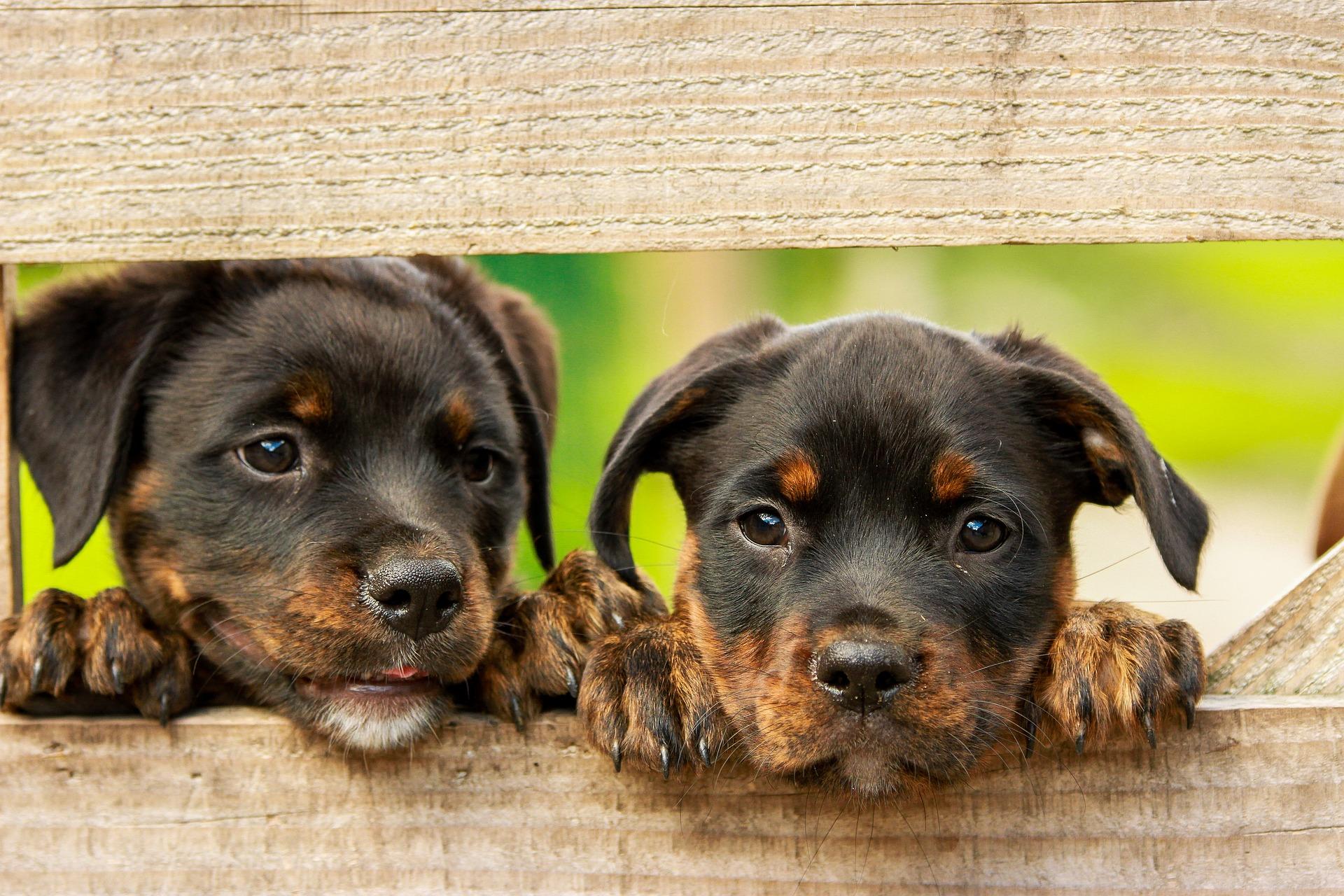 bijtende puppy